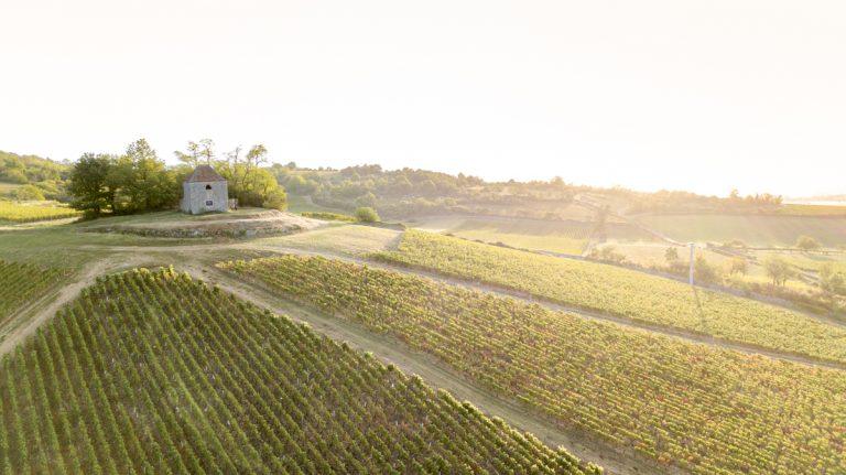photo aérienne d'un champs de vignes en bourgogne par drone